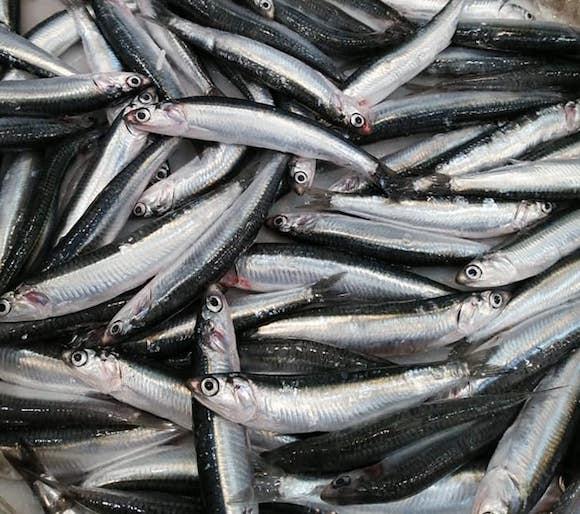 Boquerones y pescados de Málaga en Pescadería Jacobo en La Cala del Moral