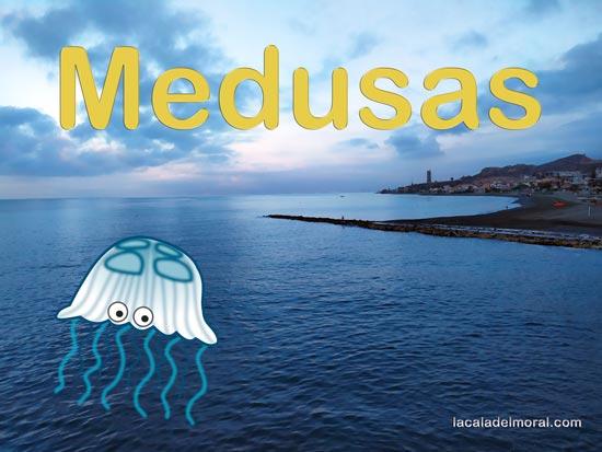 Información de Medusas en la Playa de La Cala del Moral